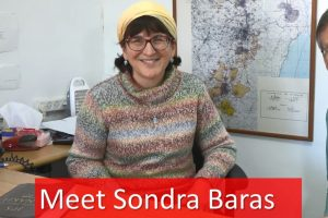 Root Source | Sondra Baras